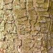 Bark Background Texture Pattern — ストック写真 #6763124
