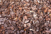 Bark mulch background — Stock Photo