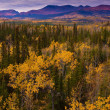 Stock Photo: Yukon Gold - Fall in Yukon Territory, Canada