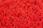 Mountain Ash Berries (Sorbus aucuparia) — Stock Photo