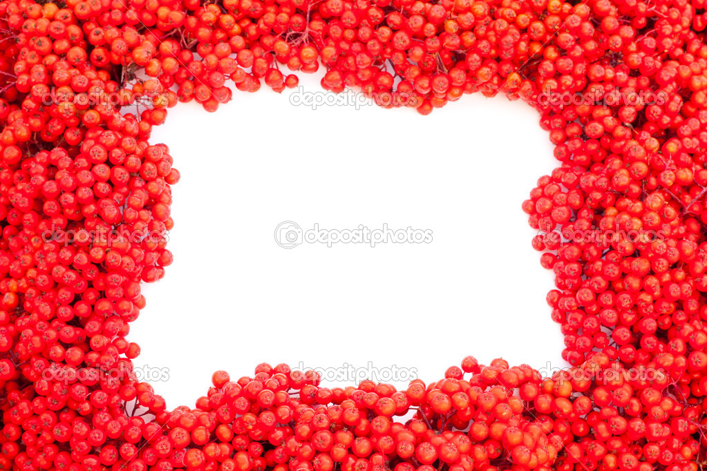 Background texture pattern of red mountain ash berries (Sorbus aucuparia) with empty white copyspace for your message. — Stockfoto #6821686