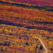 Stock Photo: Road through fall colored tundra