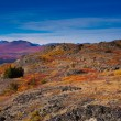 Alpine tundra — Stock Photo