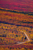 Road through fall colored tundra — Stock Photo