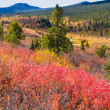 Fall in northern wilderness, Yukon T, Canada — Stockfoto #6908148