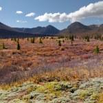 Alpine landscape in fall — Stock Photo