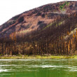 Stock Photo: Boreal forest at Yuokon River destroyed by fire