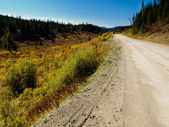 Fall colors at South Canol Road, Yukon T, Canada — Stock Photo