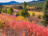 Fall in northern wilderness, Yukon T, Canada — Stock Photo