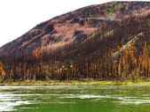 Boreal forest at Yuokon River destroyed by fire — Stock Photo