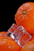 Mandarin ice5 — Photo