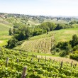Italy - Piedmont region. Barbera vineyard - Stock Photo