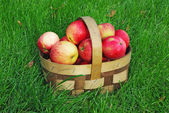 Apple basket on grass — Stock Photo