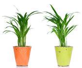 растения комнатные — Стоковое фото