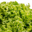 Stock Photo: Lettuce salad leaves