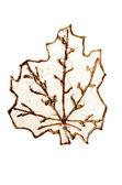 Czas ozdobny złoty liść — Zdjęcie stockowe