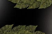 Green leaf frame — Stock Photo
