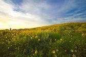 Laguna prado — Foto Stock