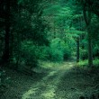 Mysterious Forest Path — Stock Photo #7340122