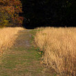 Hiking Trail in Tall Grass — Stock Photo #7564955