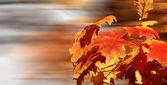 Golden leaves — Stock Photo