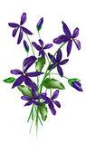 Gentle decorative flowers.Vector eps10 — Stock Vector