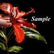 Royalty-Free Stock Vektorfiler: Chinese rose-gibiskus