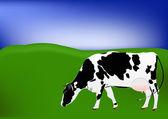 Kráva mléčné plemeno — Stock fotografie