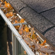 Leaves in rain gutter. - Stock Photo