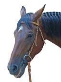 Hlava koně, hnědé — Stock fotografie