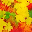 Foliage background. - Foto Stock