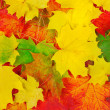 Foliage background. - Stock Photo