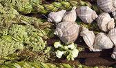 緑の植物から作られたテクスチャ — ストック写真