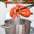 Boiled lobster — Stock Photo #7871340