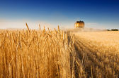 Harvest time — Foto Stock