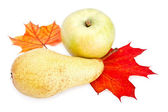Ripe apple and pear with autumn leaves — Stock Photo