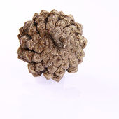 Golden conifer cone — Stock Photo