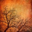 Stockfoto: Abstract trees