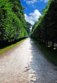 Green alley — Foto Stock