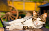 Gatto al sole — Foto Stock