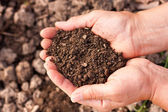 Soil in hands — Stock Photo