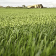 Monument and wheat — Stock Photo