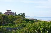 Mangroves along beach in florida — Stock Photo