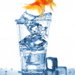 Goldfish in glass water — Stock Photo