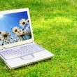 Stock Photo: Laptop and flower