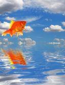 Blue sky and goldfish — Stock Photo