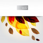 Autumn leaves design — Stock Vector