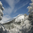 The mountains and the woods after a fresh snow on a sunny day — Stockfoto