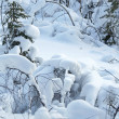 Winter lanscape / snow forest — Stock Photo #7556100