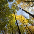 Autumn forest / bright colors of leaves / sunlight — Stock Photo